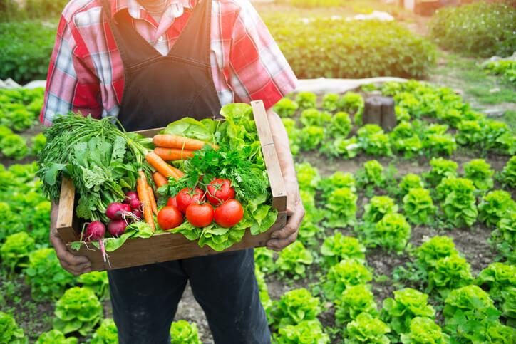 Chính sách hỗ trợ đối với hoạt động sản xuất sản phẩm hữu cơ