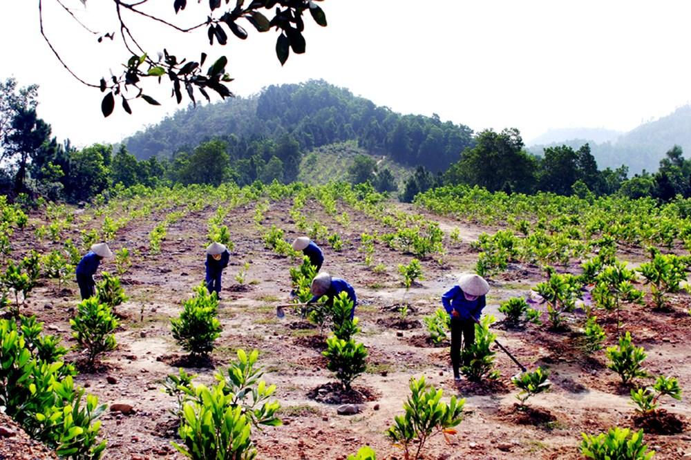 Việc triển khai BV và PT rừng cần được khoán ổn định cho người dân