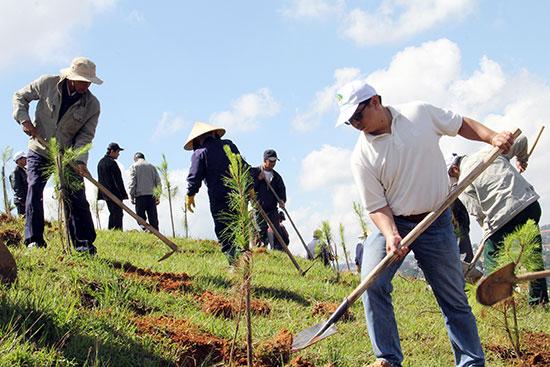 Định mức hỗ trợ các dự án đầu tư bảo vệ, phát triển rừng