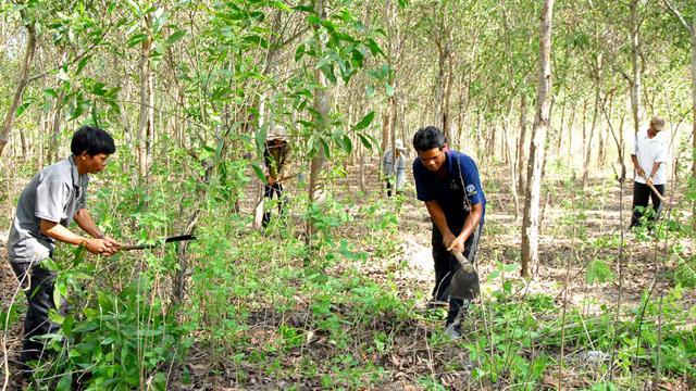 Hướng dẫn thực hiện dự án trồng, bảo vệ rừng của tổ chức do Nhà nước thành lập