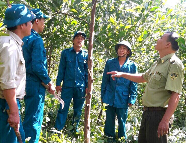 Hiệu quả bước đầu mô hình Hợp tác xã Dân quân trồng rừng tại xã Bạch Ngọc
