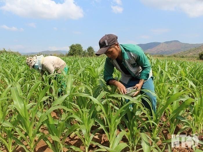 Thay đổi thủ tục đăng ký chuyển đổi cơ cấu cây trồng trên đất trồng lúa