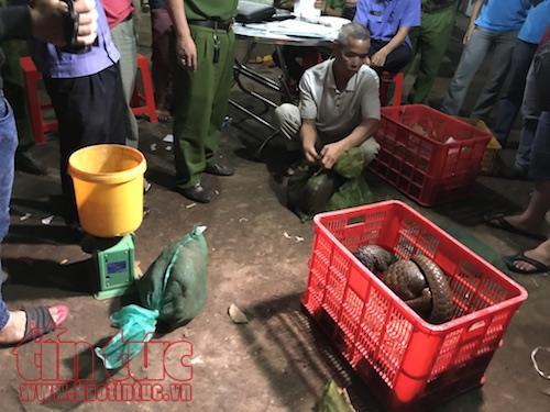 Phát hiện hàng chục con tê tê, hổ mang chúa và khỉ đuôi dài bị mua bán