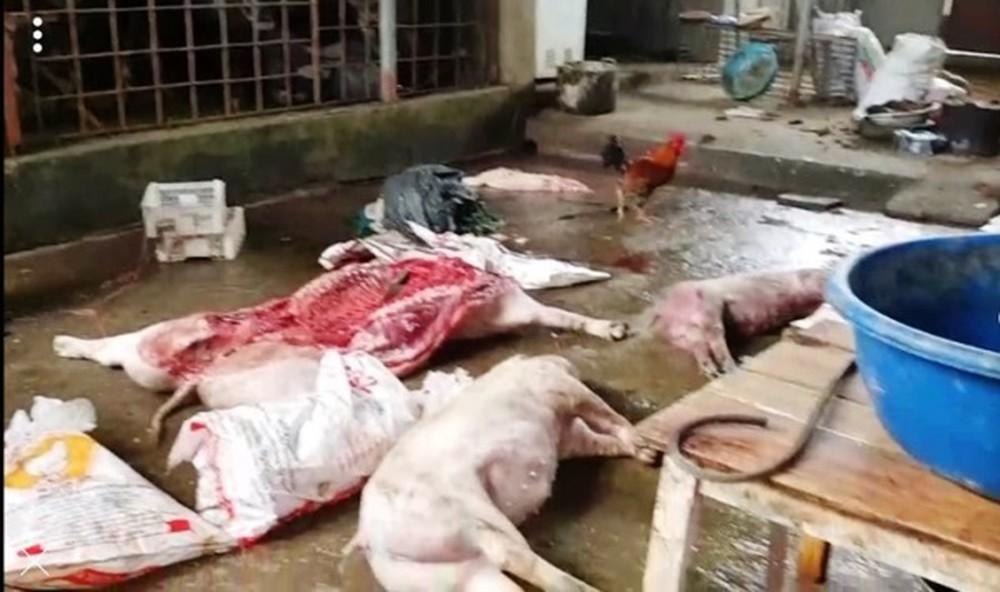 Sản phẩm động vật không bảo đảm yêu cầu bị xử lý thế nào?
