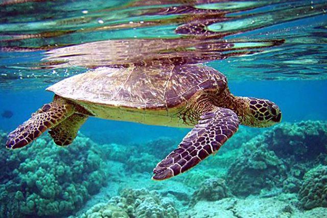 Hồ sơ chấp thuận khai thác loài thủy sản nguy cấp, quý, hiếm