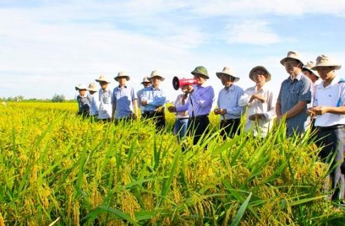 02 nguồn kinh phí chính thực hiện hoạt động khuyến nông năm 2020