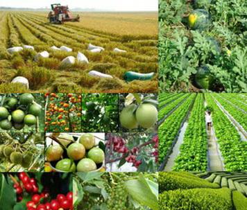 Hồ sơ, thủ tục tổ chức, cá nhân tự công bố lưu hành giống cây trồng