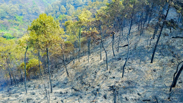 Cách xác định thiệt hại, nguyên nhân cháy rừng áp dụng từ 15/02/2020