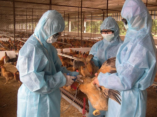 Quy định mới về thu thập, bảo tồn, khai thác nguồn gen giống vật nuôi