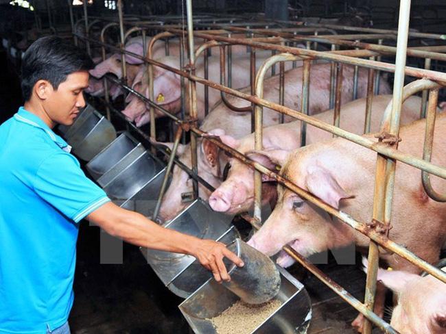 Thông tin cần biết khi sử dụng thức ăn chăn nuôi chứa kháng sinh