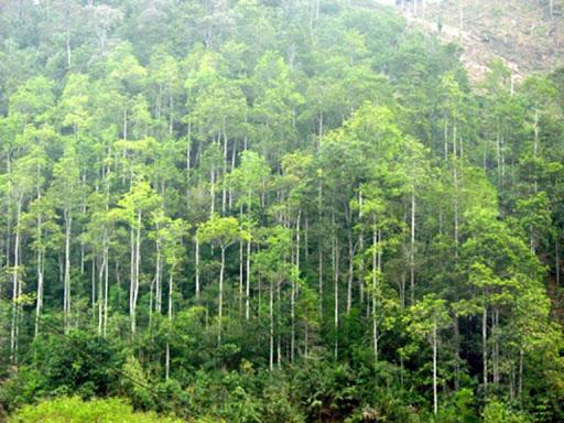 Các dự án được chuyển mục đích sử dụng từ rừng tự nhiên sang mục đích khác