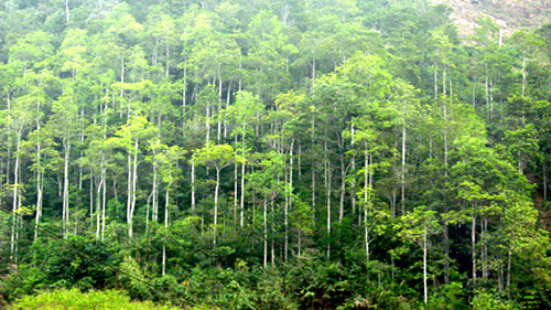 05 dự án chuyển mục đích sử dụng rừng tự nhiên sang mục đích khác