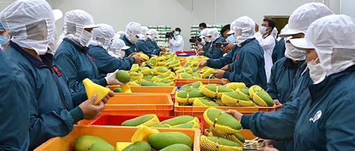 Từ Hiệp định EVFTA, nông sản Việt Nam có những cơ hội và thách thức thế nào?