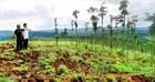 Các trường hợp phải nộp tiền sử dụng đất, thuê đất quốc phòng hằng năm