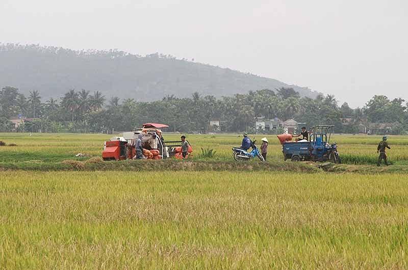 Giang hồ tấn công nông dân ở thôn Đồng Tâm, đòi bảo kê gặt lúa - ảnh 4
