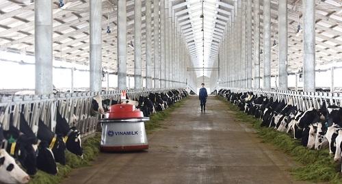 Trang trại Thanh Hóa  trang trại vừa khánh thành vào tháng 3/2018 sẽ là nơi chăm sóc và nuôi dưỡng những cô bò A2 thuần chủng.