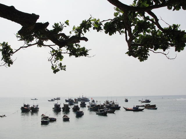 Đầu tư 42 tỉ xây dựng khu bảo tồn biển Lý Sơn - Ảnh 1.