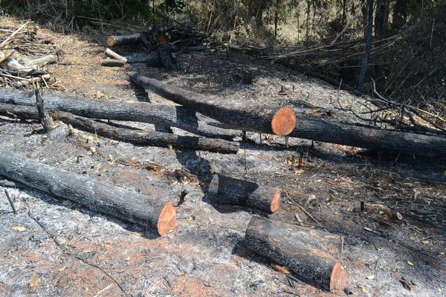 Diện tích rừng bị phá do ông Doanh có hành vi nhận hối lộ, làm ngơ cho lâm tặc