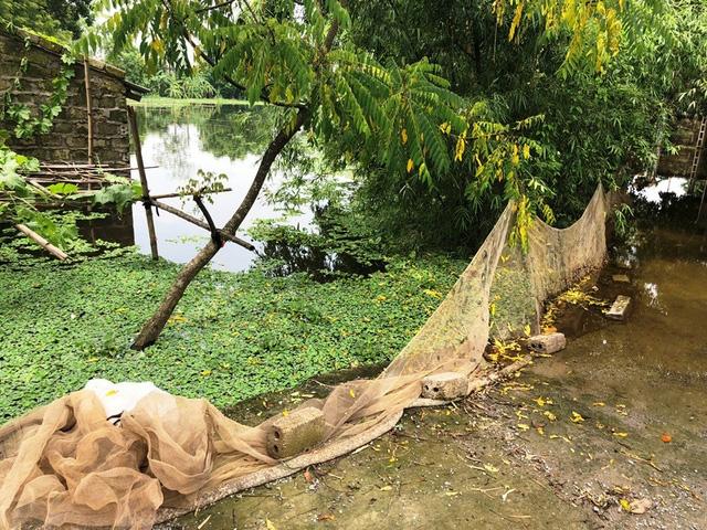 Người dân giăng lưới quanh ao để tránh cá bơi ra ngoài nhưng thiệt hại vẫn rất nhiều
