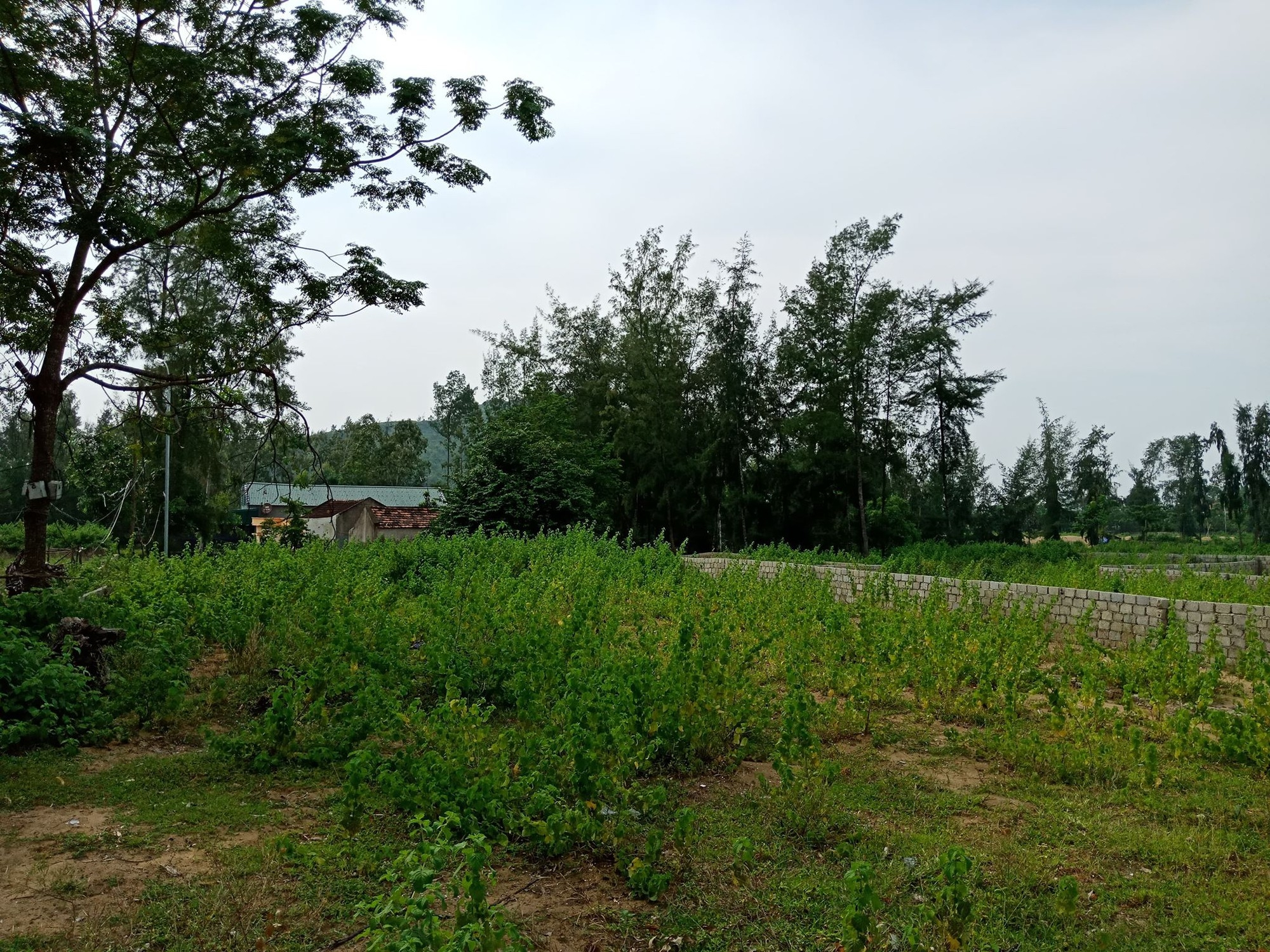 """""""Hô biến"""" cả nghìn m2 đất trồng cây lâu năm thành đất ở tại Thanh Hóa? - Ảnh 4."""