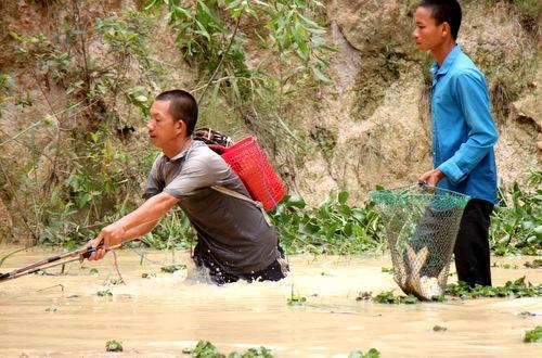 Người dân kích điện bắt cá sổng từ ao nuôi trong hai ngày nay. Ảnh: Nguyễn Khoa