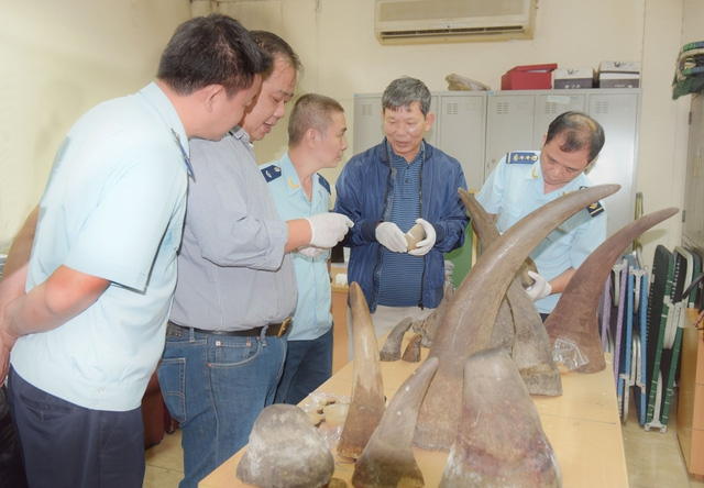 Số sừng tê giác được Hải quan Hà Nội bắt giữ