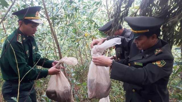 Giải cứu số động vật hoang dã bị mang qua biên giới - Ảnh 1.
