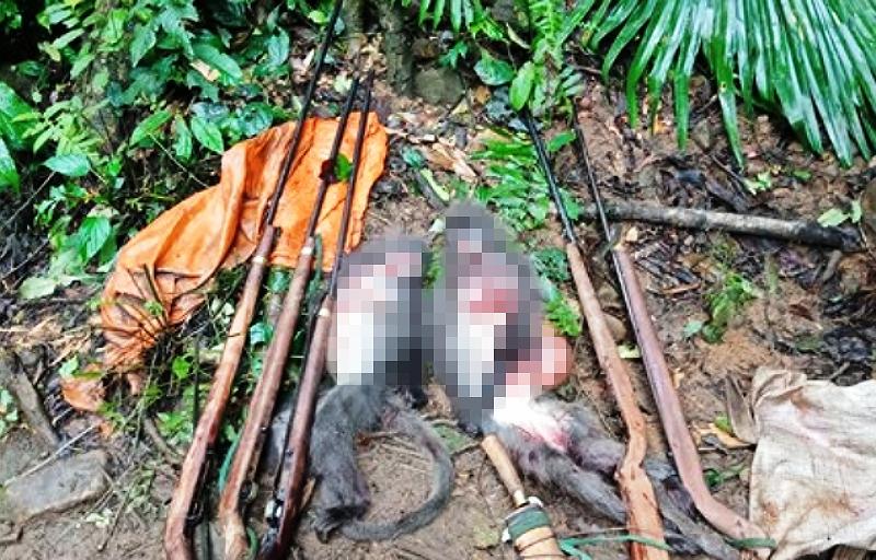 5 người chế tạo súng đi giết voọc dã man trong vườn quốc gia - ảnh 1