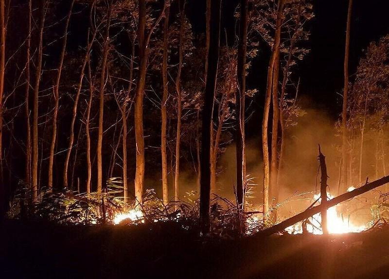 Đốt rẫy làm cháy 5 ha rừng - ảnh 1