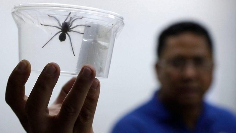 Giấu 757 con nhện sống trong hộp bánh khi qua hải quan - ảnh 1