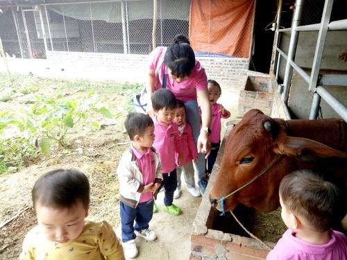 Thầy trò trường Shining Star tập làm nông dân dịp cuối tuần.