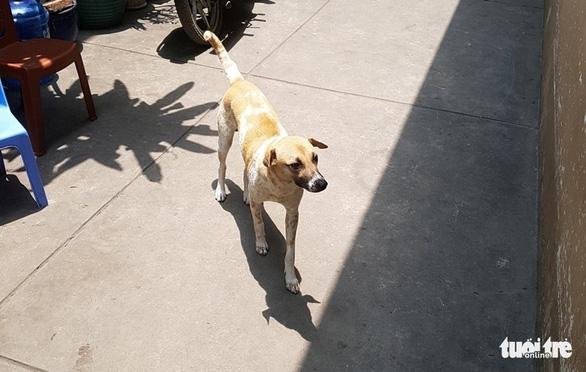 Vụ nhân viên ghi số nước bị chó cắn, đánh bể đầu: Con chó đã từng cắn người - Ảnh 2.