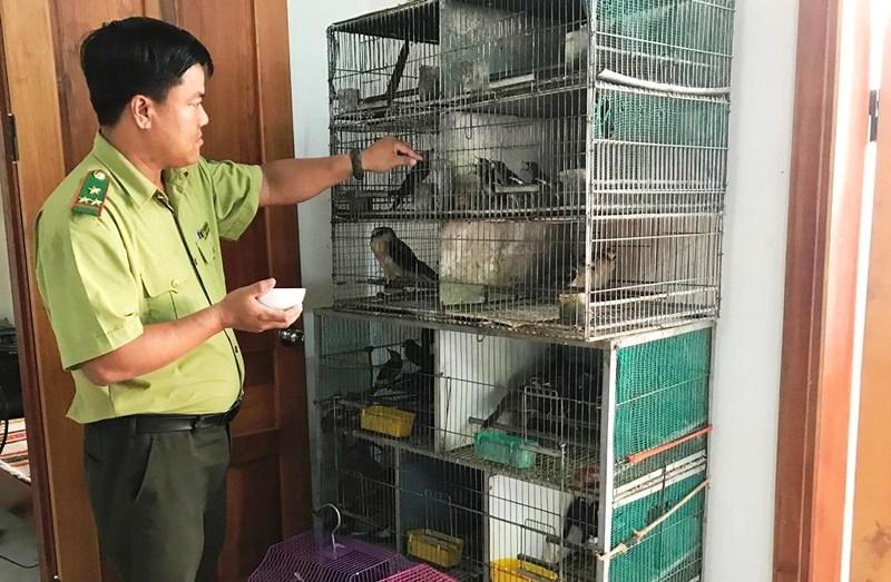 Kiểm lâm thả hàng chục con chim về môi trường tự nhiên - ảnh 1