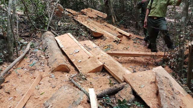 Hiện trường vụ phá rừng trong Vườn quốc gia Yok Đôn
