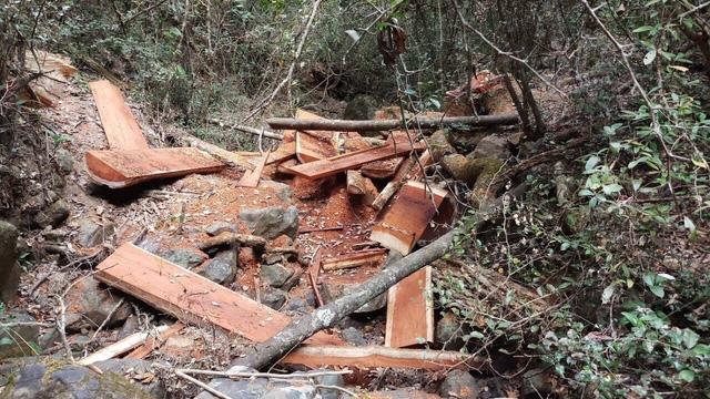 Có gần 45m3 gỗ bị cưa hạ (ảnh Cơ quan chức năng cung cấp)