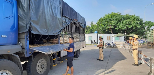 Xe chở heo vi phạm lọt qua 6 tỉnh, bị chặn đứng ở cửa ngõ Sài Gòn - Ảnh 1.