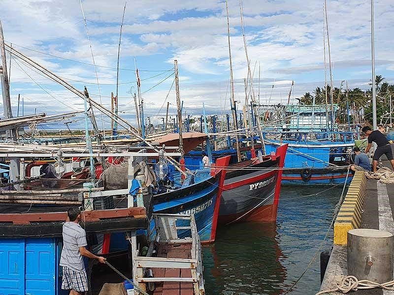 Hàng ngàn tàu cá nằm bờ vì không đủ chiều dài - ảnh 1