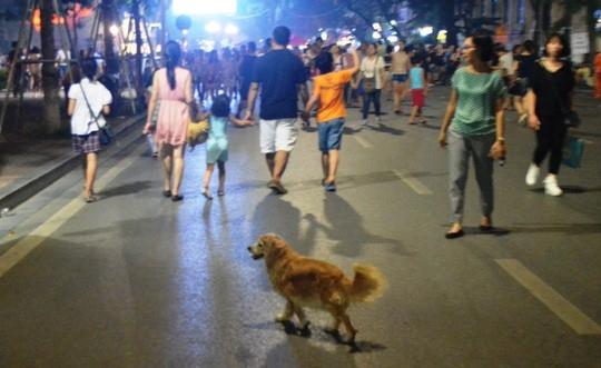 Trong trường hợp thả chó cắn người, chủ vật nuôi phải bồi thường cho người bị hại theo quy định.
