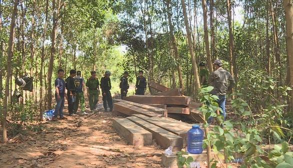 Phát hiện thêm hàng trăm khối gỗ khi mở rộng điều tra vụ phá rừng - Ảnh 1.