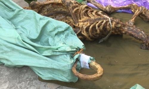Xương hổ được phát hiện tại nơi ở của Minh. Ảnh: Nguyễn Khánh