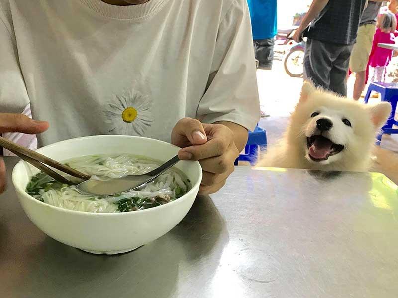 Đối xử nhân đạo với vật nuôi: Cần thực hiện sớm - ảnh 1