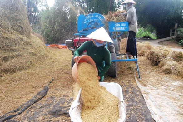 Xuất khẩu gạo nhưng có kiểm soát? - Ảnh 1.