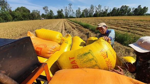 Bộ NN&PTNT kiến nghị tiếp tục cho xuất khẩu gạo nếp - Ảnh 1.
