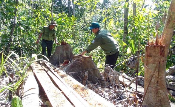 Lâm tặc mở cả cây số đường giữa rừng để đón gỗ - Ảnh 3.