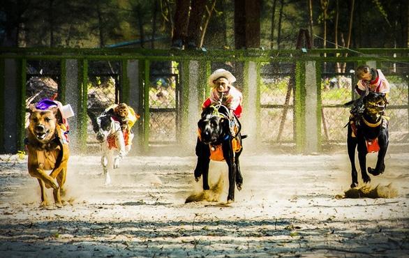 Xem xét cấp phép kinh doanh đặt cược đua chó tại Bà Rịa - Vũng Tàu - Ảnh 1.