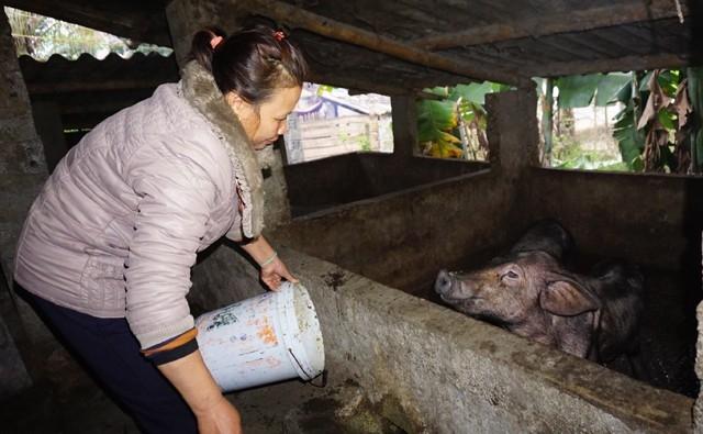 Hiện chị Vương là điển hình hoàn lương làm kinh tế giỏi tại xã miền núi Tam Quang, huyện Tương Dương, Nghệ An