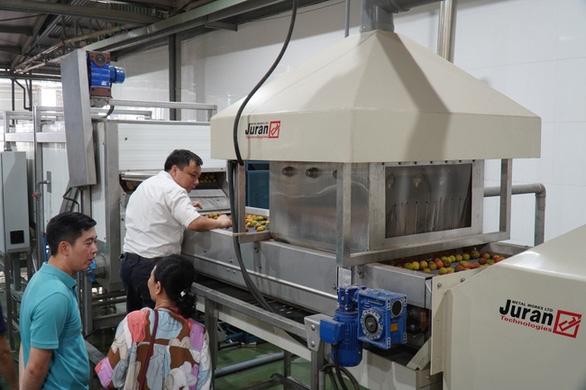 Xuất khẩu 1 tấn vải thiều tươi đầu tiên sang Nhật Bản - Ảnh 1.