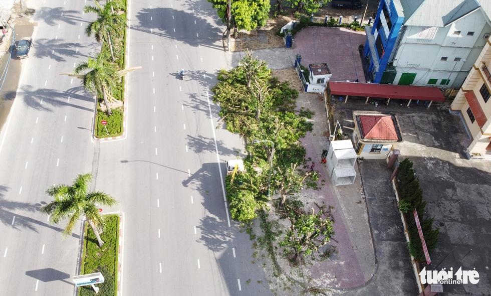 Hàng loạt cây xanh thành phố Vinh bị vặt trụi trong nắng nóng 40 độ - Ảnh 1.