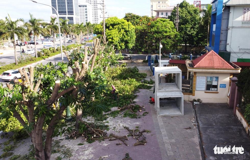 Hàng loạt cây xanh thành phố Vinh bị vặt trụi trong nắng nóng 40 độ - Ảnh 4.