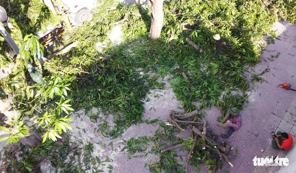 Hàng loạt cây xanh thành phố Vinh bị vặt trụi trong nắng nóng 40 độ - Ảnh 5.
